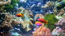 Colorful Philippine reef at the Wild Reef exhibit.